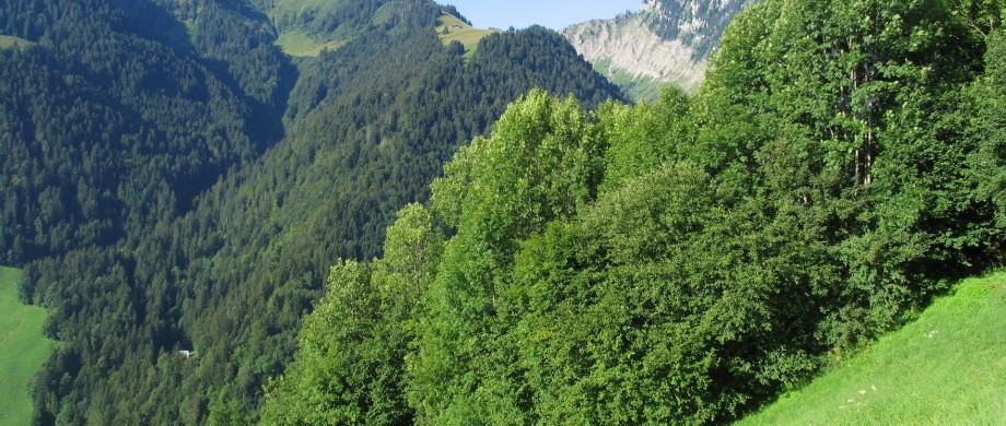 Rossinière 2009 3 036